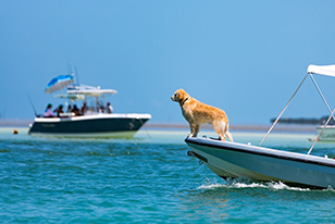 dog on boat in Tampa Bay